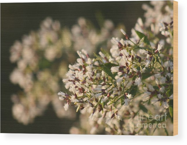 White Wood Print featuring the photograph White Flowers by Nadine Rippelmeyer