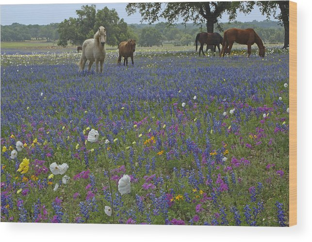 Texas Wood Print featuring the photograph White On Blue by Susan Rovira