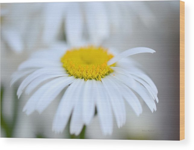 Daisy Wood Print featuring the photograph White Wedding by Donna Blackhall