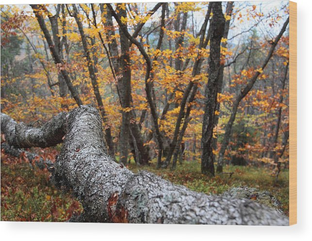 Autumn Wood Print featuring the photograph Wild Forest by Silviu Matei