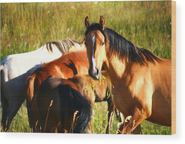 Wild Horse Wood Print featuring the photograph Wild Horse At Lunch by Veronica Vandenburg