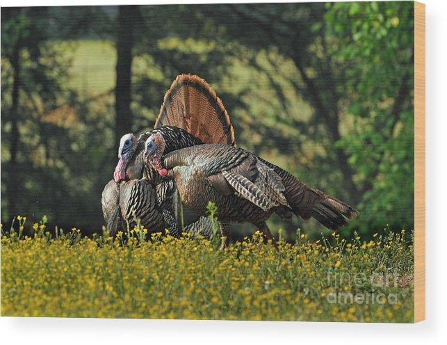 Wild Turkey Wood Print featuring the photograph Wild Turkey 2 by Sue Jarrett