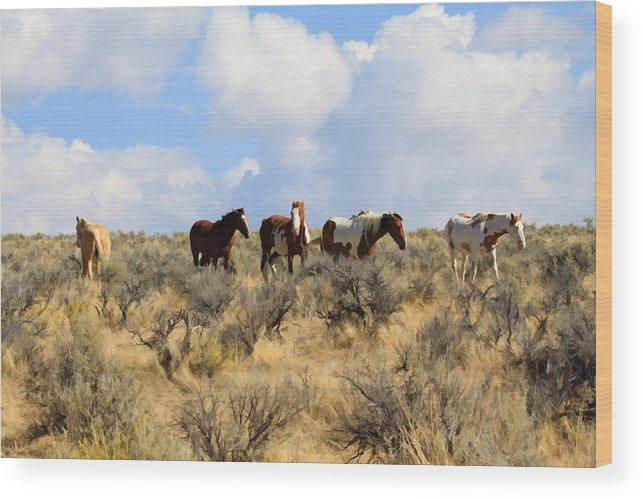 Wild Horses Wood Print featuring the photograph Wild West Pintos by Steve McKinzie