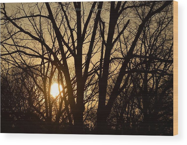 Relaxing Moment Wood Print featuring the photograph Winding Down The Evening by Sonali Gangane