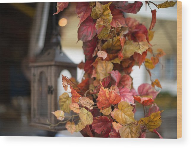 Autumn Wood Print featuring the photograph Wine Bower by Frank Gaertner