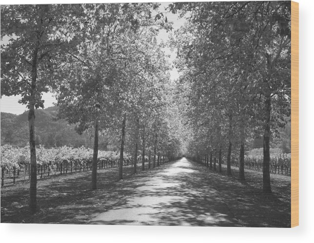 Black And White Wood Print featuring the photograph Wine Country Napa Black And White by Suzanne Gaff