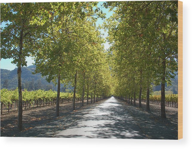 Napa Wood Print featuring the photograph Wine Country Napa by Suzanne Gaff
