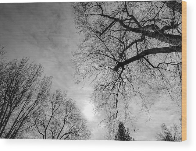 Landscape Wood Print featuring the photograph Winter Branch by Mark Englert