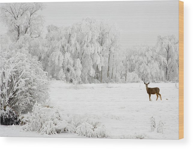 Hoar Wood Print featuring the photograph Winter Doe by Mary Jo Allen