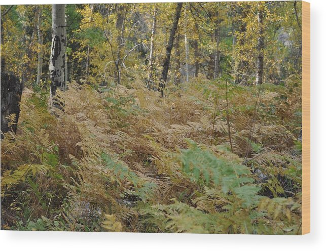 Ferns Wood Print featuring the photograph Winter Ferns by Teresa Howell