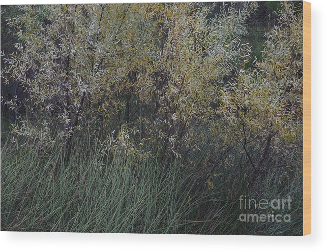 Willows Wood Print featuring the photograph Winter Silver by Charles Majewski