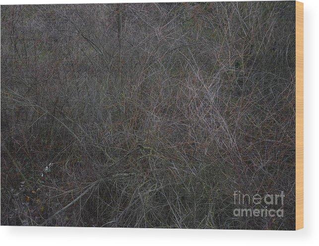 Winter Wood Print featuring the photograph Winter Tangle by Charles Majewski