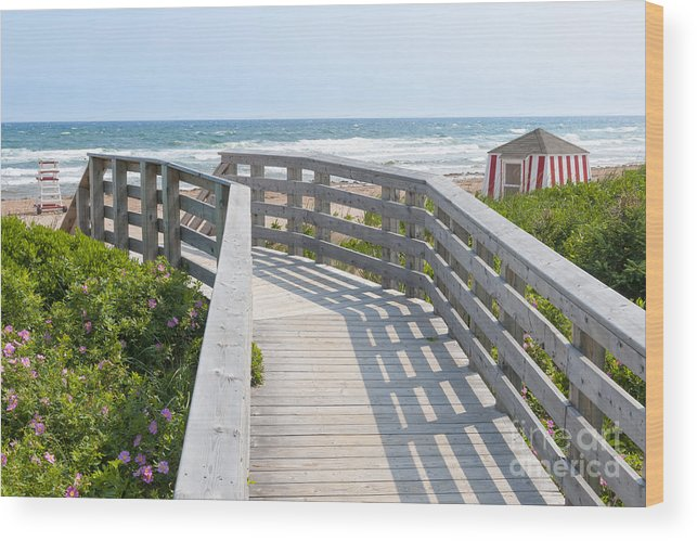 Beach Wood Print featuring the photograph Wooden Walkway To Ocean Beach by Elena Elisseeva