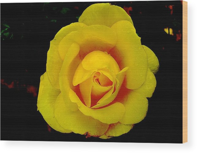 Yellow Wood Print featuring the photograph Yellow Beauty by Dwight Pinkley