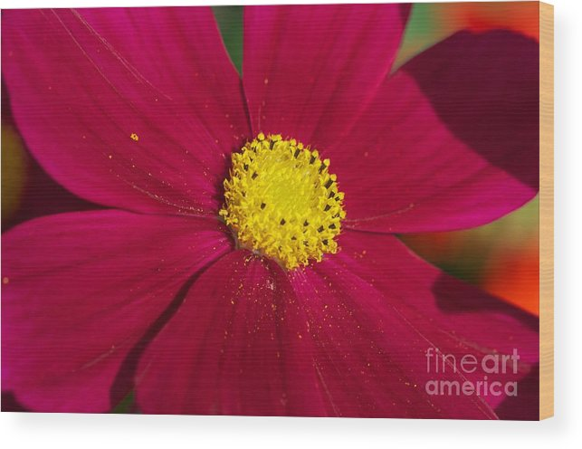 Flower Wood Print featuring the photograph Yellow Dusting by Jessica Davis