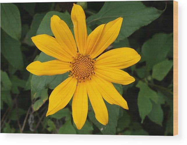 Flower Wood Print featuring the photograph Yellow Flower Petals by Robert Hamm