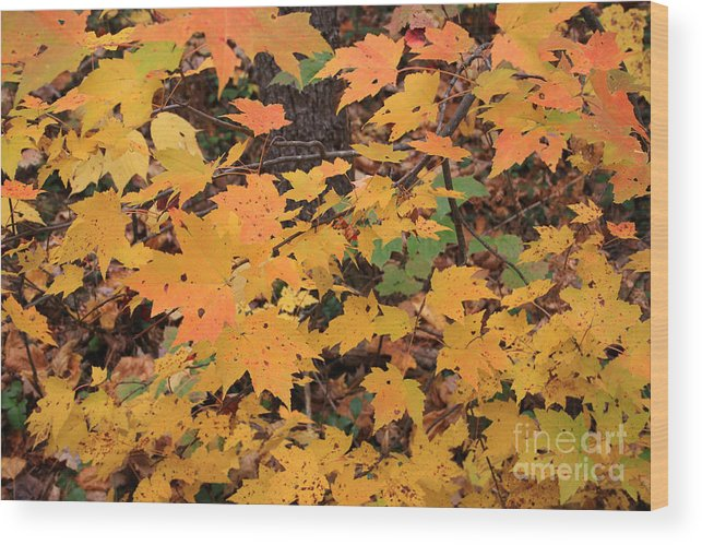 Fall Color Wood Print featuring the photograph Yellow Foliage by Michael Mooney