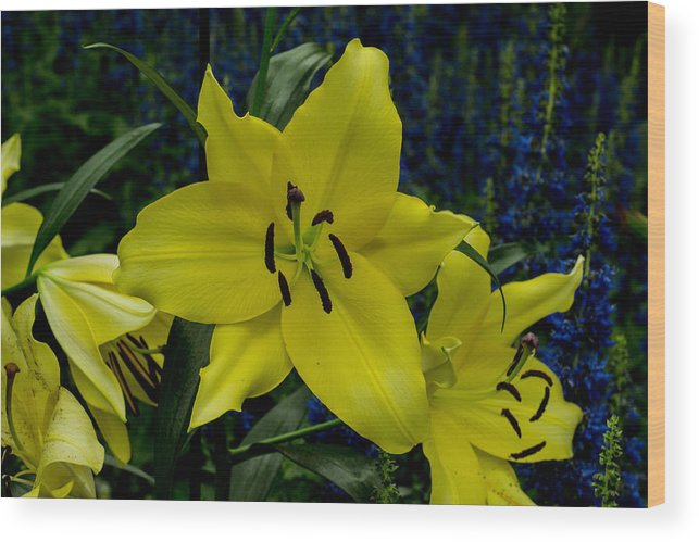 Yellow Wood Print featuring the photograph Yellow Lillies by Wanda J King