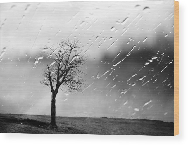 Tree Wood Print featuring the photograph Your Tears I Root by The Artist Project
