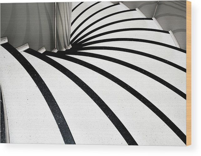 Steps Wood Print featuring the photograph Zebra Steps by Linda Wride