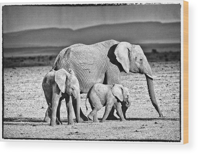 Africa Wood Print featuring the photograph African Elephant In The Masai Mara by Perla Copernik