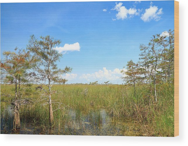 Everglades Wood Print featuring the photograph Everglades Landscape by Rudy Umans