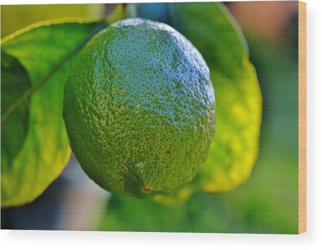 Plant; Macro; Leafs; Garden; Green; Tree; Citrus; Fruit; Background; Autum; Yellow; Decorative; Sour; Lemon; Fresh; Wood Print featuring the photograph Lemon On Tree by Werner Lehmann