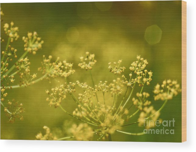 Dill Wood Print featuring the photograph Secret Garden by Szalonaisa Photography