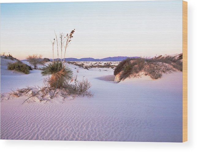 Landscape Wood Print featuring the photograph White Sands by Larry Gohl