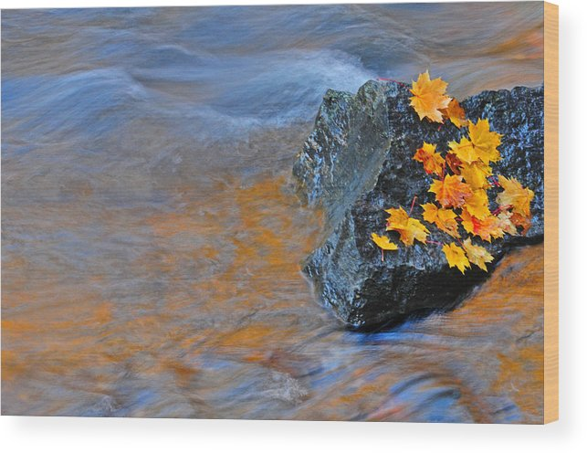 Autumn Wood Print featuring the photograph Autumn Flow by Dave Mills