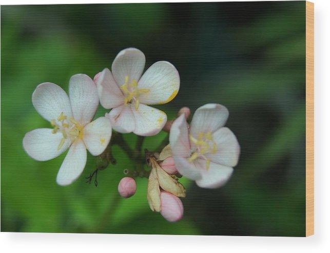 Wood Print featuring the photograph Flowers by Gornganogphatchara Kalapun