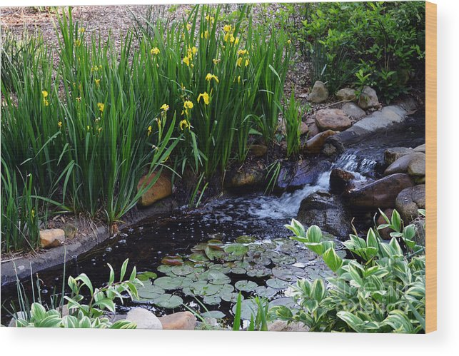Iris Wood Print featuring the photograph A Creek Scene by Eva Thomas