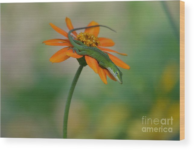 Orange Flower Wood Print featuring the photograph A Flower For Me by Kathy Gibbons
