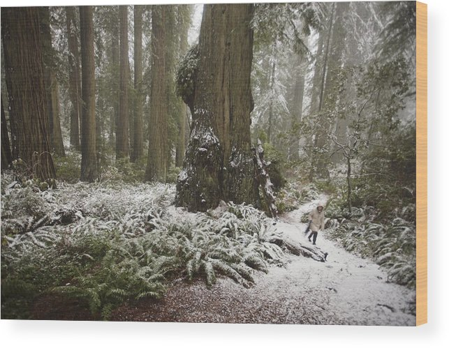 Outdoors Wood Print featuring the photograph A Rare Snow Dusts The Trail Through Del by Michael Nichols