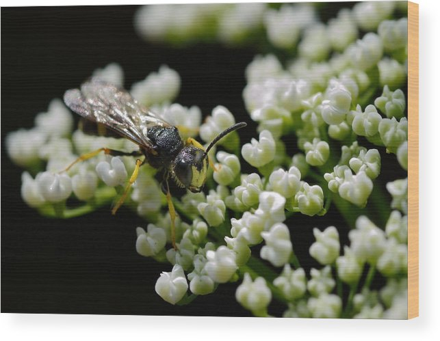 Insect Wood Print featuring the photograph Aliens From Your Back Yard 6 by Marian Heddesheimer