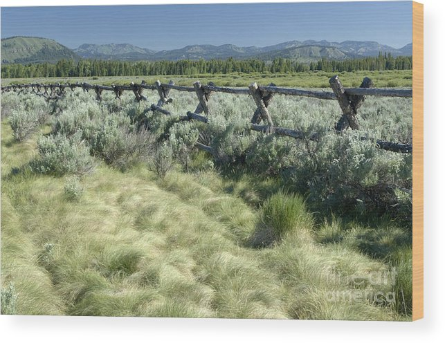 Grand Teton National Park Wood Print featuring the photograph Along The Fence by Sandra Bronstein