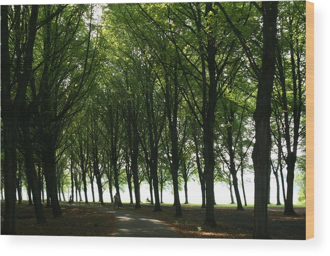 Park Wood Print featuring the photograph Amsterdam Bos by Theresa Ferron