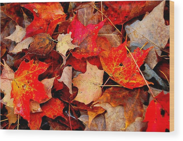 Autumn Wood Print featuring the photograph Autumn Leaves by Dave Sandt