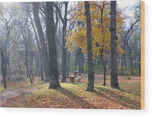 Urban Wood Print featuring the photograph Autumn Morning Munson Park by Carla Bendixen