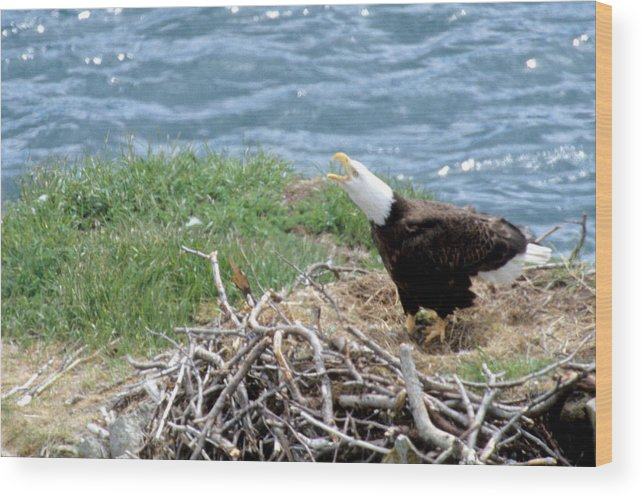 Bald Eagle Wood Print featuring the photograph Bald Eagle Calling by Larry Allan
