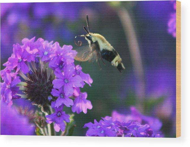 Bee Wood Print featuring the photograph Bee Fur-eal by Phil Cappiali Jr