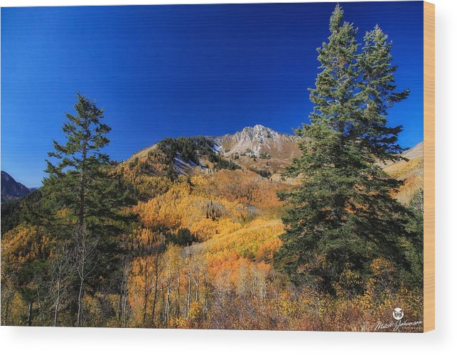Landscape Wood Print featuring the photograph Between The Pines by Mitch Johanson