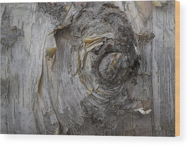 Art Wood Print featuring the photograph Birch Tree Bark No.0859 by Randall Nyhof