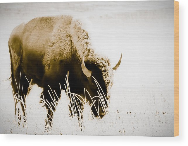 Buffalo Wood Print featuring the photograph Bison Winter by Paul Roach