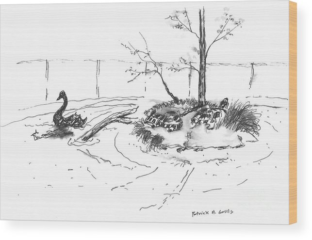 Swan Wood Print featuring the painting Black Swan And Sliders by Patrick Grills