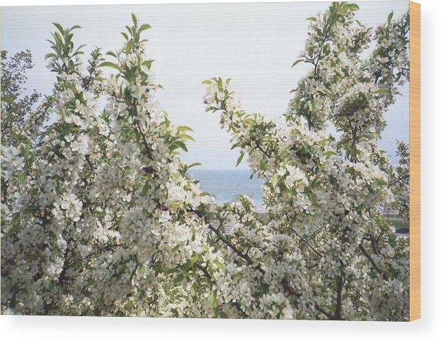 Tree Wood Print featuring the photograph Blooming Tree by Annella Grayce