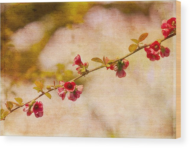 Flowers Wood Print featuring the photograph Blooms by Rebecca Cozart