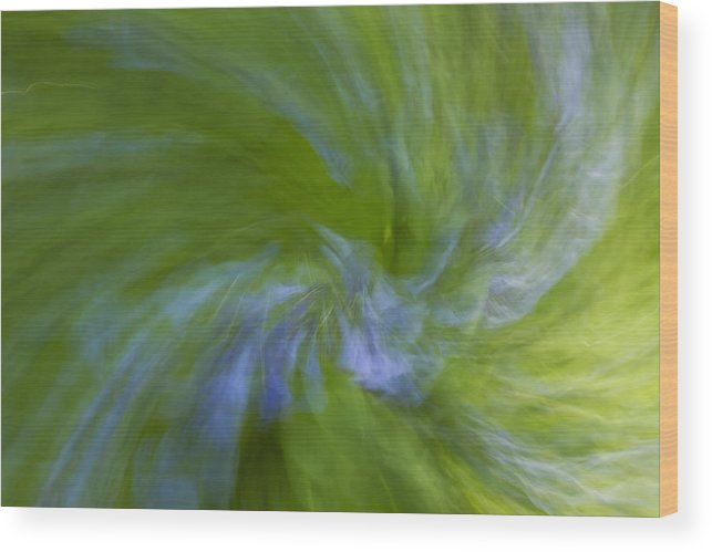 Bluebell Wood Print featuring the photograph Blue Bells Vortex 1 by John Brueske