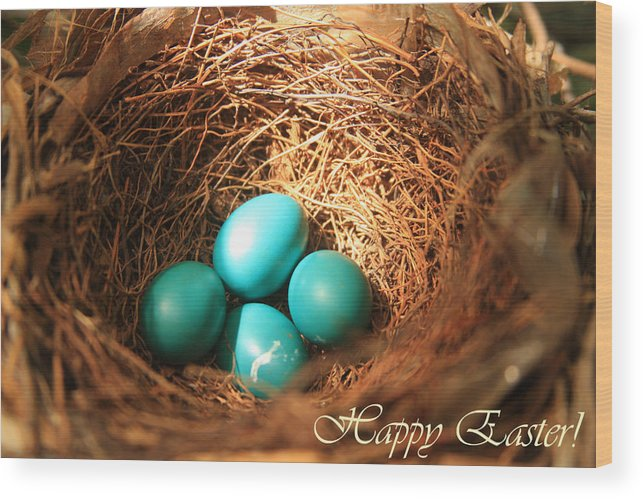 Bird Wood Print featuring the photograph Blue Eggs In Nest by Emanuel Tanjala