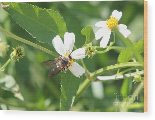 Bumble Bee Wood Print featuring the photograph Bumble Bee 1 by Michelle Powell